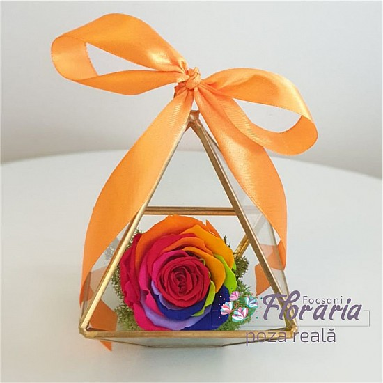 Cryogenized Multicolored Rose in Terrarium glass with golden elements