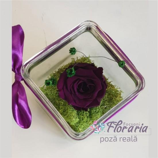 Cryogenate Purple Rose in a glass cube